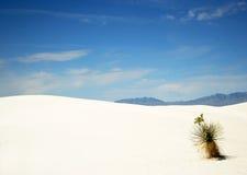 Ein Yucca in den weißen Sanden lizenzfreie stockbilder