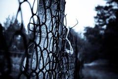 Ein Zaun Stockfotografie