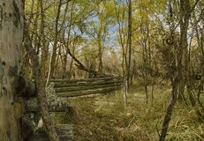 Ein Zaun im Wald Stockbilder