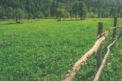 Ein Zaun und ein wildes Gras Stockfotografie