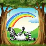 Ein Zebra am Wald mit einem Regenbogen lizenzfreie abbildung