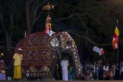 Ein zeremonieller Elefant meldet das Esala Perahera in Kandy, Sri Lanka an Stockfotos