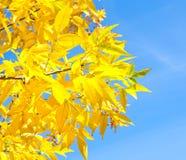 Ein Zweig des Baums Stockfotografie