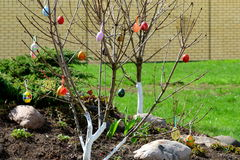 Ein Zweig im Frühjahr Stockfoto