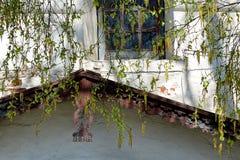 Ein Zweig im Frühjahr Stockbilder