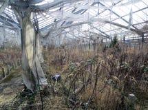 Einblick in eine verlassene Gartenarbeit Lizenzfreie Stockbilder
