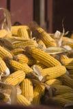 Einbuchtung-Mais Stockfotos