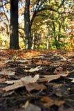 Eind van de herfst Stock Afbeeldingen