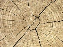Eind van de logboek houten textuur Royalty-vrije Stock Foto