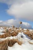 Eind van de winter Royalty-vrije Stock Afbeeldingen