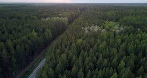 Eindeloos donker naald boslandschap met weg in schemer stock footage