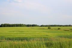 Eindeloos Siberisch gebied voor het kweken van gewassen stock fotografie