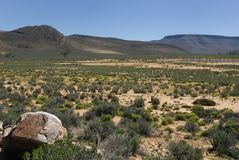 Eindeloze Afrikaanse Savanne Stock Afbeeldingen