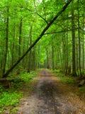 Eindeloze bosweg royalty-vrije stock foto's