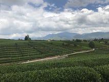 Eindeloze groene landbouwgrond stock afbeeldingen