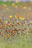 Eindeloze kleine bloemen - behang royalty-vrije stock afbeelding