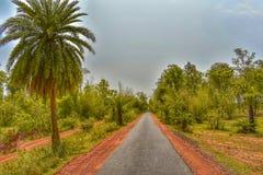 eindeloze weg met palm en weelderig groen stock foto's