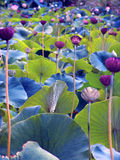 Eindeutige Blumen stockbild