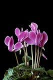 Eindeutige Blumen Stockfotografie