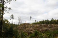 Eindeutige Waldfläche Lizenzfreies Stockbild