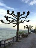 Eindeutiger Baum Stockfotos