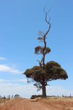 Eindeutiger Baum Stockfotografie