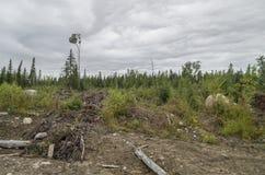 Eindeutiger Wald Stockfoto