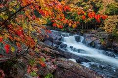 Eindeutiger Wasserfall gestaltet durch rote Blätter Lizenzfreies Stockbild
