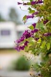 Eindrücke auf einem Campingplatz an einem sonnigen Tag lizenzfreies stockbild