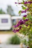 Eindrücke auf einem Campingplatz an einem sonnigen Tag lizenzfreie stockbilder