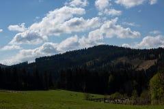 Eindrücke vom Nationalpark in Ludwigsthal-Bayern stockfotos