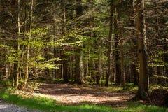 Eindrücke vom Nationalpark in Ludwigsthal-Bayern lizenzfreie stockbilder