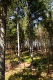 Eindrücke vom Nationalpark in Ludwigsthal-Bayern stockfoto