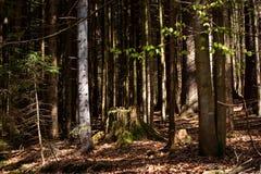 Eindrücke vom Nationalpark in Ludwigsthal-Bayern stockbild