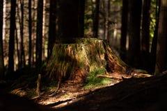 Eindrücke vom Nationalpark in Ludwigsthal-Bayern stockfotografie