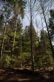 Eindrücke vom Nationalpark in Ludwigsthal-Bayern lizenzfreie stockfotos