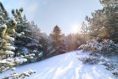 Eindringen des hellen Sonnenscheins tief in den Wald lizenzfreies stockbild