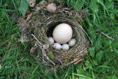Eindringling im Nest Lizenzfreies Stockbild