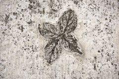 Eindruck von Blättern im Beton stockbild