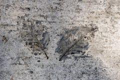 Eindruck von Blättern im Beton lizenzfreies stockbild