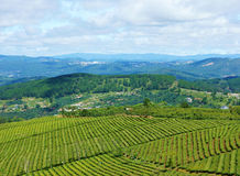 Eindrucksvolle Landschaft, Dalat, Vietnam, Teeplantage Lizenzfreie Stockfotos