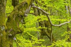 Eindrucksvoller Blätterpilz auf dem Stamm stockfoto