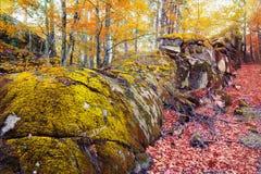 Eindrucksvoller Wald mit moosigen Felsen gestalten im Herbst landschaftlich Stockfoto