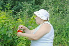 Eine ältere Frau lizenzfreie stockbilder