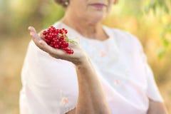 Eine ältere Frau mit einer Niederlassung von Viburnum in ihrer Hand Stockbilder