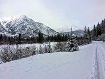 Eine abgelegene und szenische Cross Country-Skifahrenspur außerhalb Banffs, Alberta, Kanada Die Spur geht entlang den Bogen-Fluss stockbilder