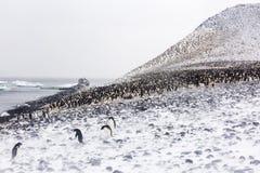 Eine Adelie-Pinguin-Kolonie auf einer Steigung Lizenzfreies Stockfoto
