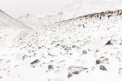 Eine Adelie-Pinguin-Kolonie auf einer Steigung Stockbilder