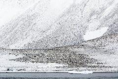 Eine Adelie-Pinguin-Kolonie auf einer Steigung Stockbild