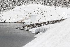 Eine Adelie-Pinguin-Kolonie und ein See Stockfoto